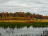 Newell Road Pond