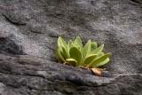 Plant on Rock