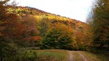 Grassy Hollow Road