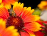 LPShoney bee.jpg