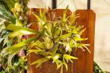 staghorn fern.jpg