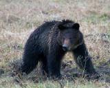 Hobo Bear.jpg