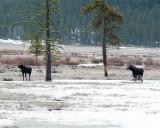 Moose Brothers at Pebble Creek.jpg