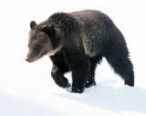 Hobo in the Snow.jpg