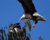 Swooping In.jpg