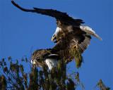 Screaming Eagle.jpg