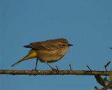 Bird on a Twig.jpg