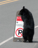 Cub Playing with Sign.jpg