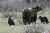 Grizzly Family.jpg