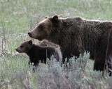 610 and her Cub.jpg