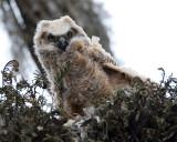 Owl Chick.jpg