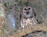 Owl Hoot.jpg