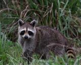 Florida Wildlife