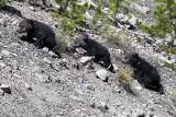 Beryl Springs Cubs.jpg