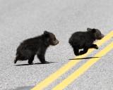 Beryl Springs Cubs Crossing the Road.jpg