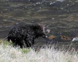 Beryl Springs Cub Screeching for Mom.jpg
