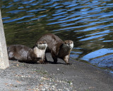 Otters on the Beach.jpg