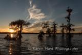 Louisiana Landscapes