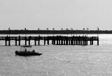 Seawolf Fishing Pier