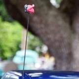 Houston Texans Bull