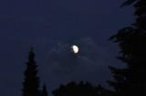 Silent nocturnal wanderer