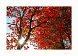 Autumn 2014 New Hampshire