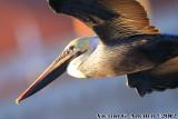 _Birding Catalina Island