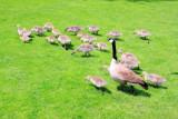Mother Goose, Governor Tom McCall Waterfront Park, Portland, Oregon