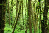 Woods around Pittock Mansion, Portland, Oregon
