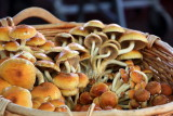 Mushroom, Portland Wednesday Market
