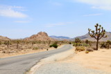 Joshua Tree sighting, Park Boulevard, Joshua Tree National Park, California
