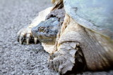 Turtle Surprise, Summer 2013
