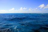 Atlantic Ocean, John Pennekamp Coral Reef State Park, Florida Keys