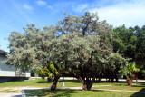 Tree Colony, Bahia Honda State Park, Bahia Honda Key, Florida Keys