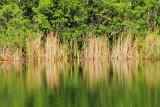National Key Deer Refuge, Big Pine Key, Florida Keys