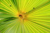 Palm Tree, Florida Keys
