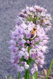 Bee, Summer 2013