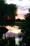 Sunset, Chicago Botanic Gardens