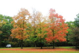 Deer Grove Forest Preserve, Palatine, IL - Fall colors 2013