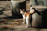 Cat, Naritasan park, Narita, Japan