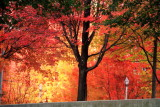 Lamp in Fall, Millennium Park, Chicago, Illinois