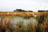 Savannah National Wildlife Refuge