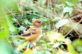 Sparrow, Savannah National Wildlife Refuge