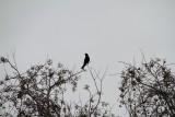 Bird, Savannah National Wildlife Refuge