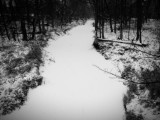 Sleepy Hollow, Creek, Palatine, Winter 2014