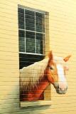 Window, Horse, Charleston Historic District