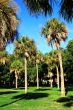 Palm trees, Waterfront Park, Charleston Historic District