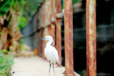 A visitor to the Canals