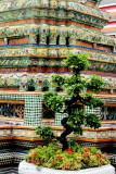 Bonsai plant, Wat Pho, Temple of the Reclining Buddha
