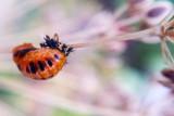 Butterfly Garden, Flower Macro, Mt. Prospect, Summer 2014